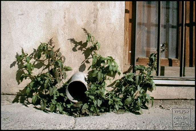 Fotografía de una planta creciendo en una acera justo bajo una tubería de desagüe