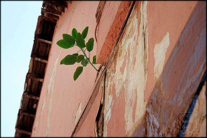 Fotografía de una planta creciendo en la pared de una casa