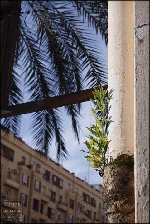Fotografía de una planta creciendo en un tubería en Valencia
