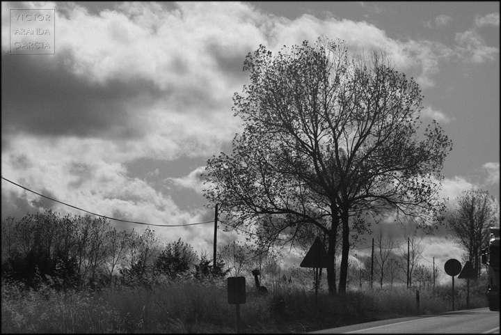 Fotografía en blanco y negro de un árbol junto a una carretera con un fondo de nubes