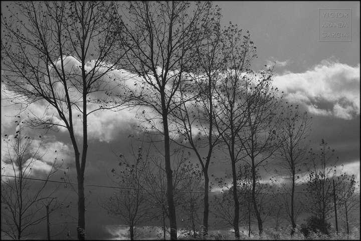 Fotografía de un grupo de árboles similares a contraluz y con nubes de fondo