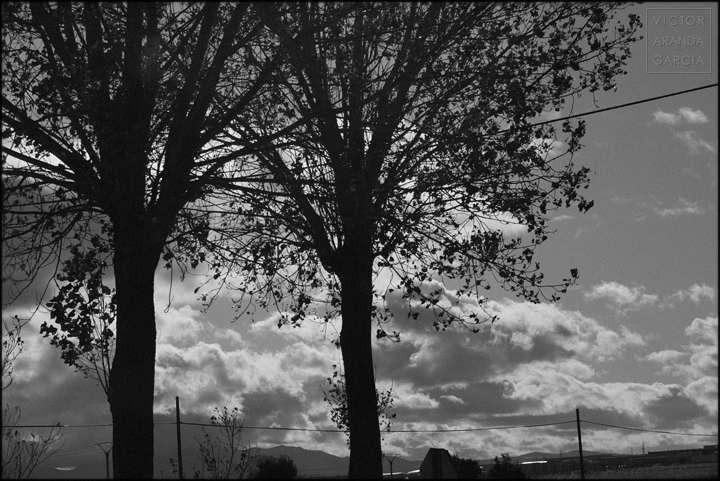 Fotografía en blanco y negro de dos árboles gemelos con un fondo de nubes