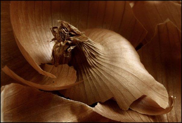 Foto artistica de una cebolla