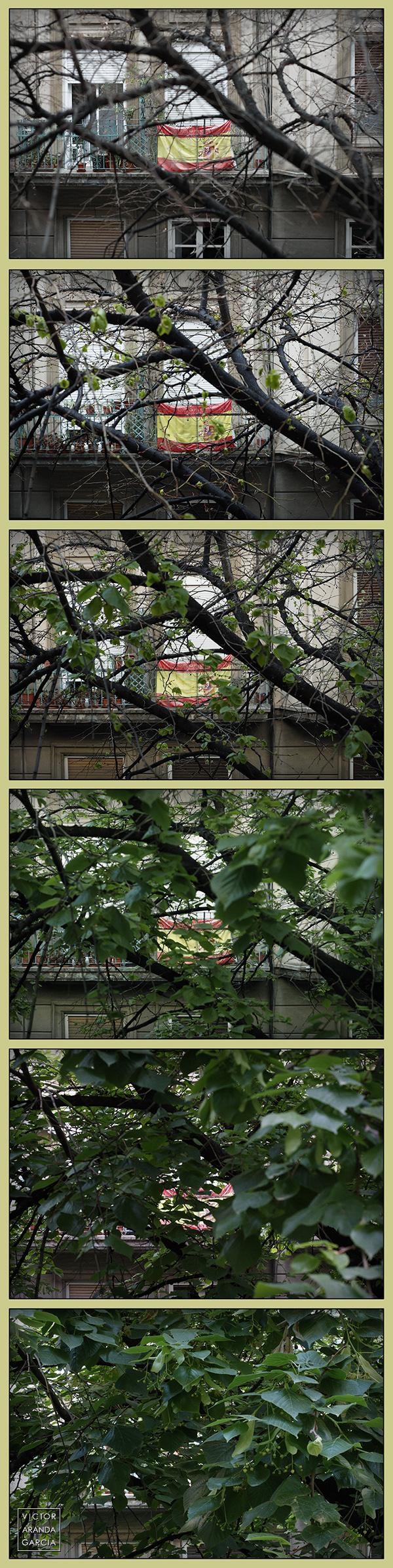 La imagen muestra una secuencia de 6 fotografías tomadas en primavera a una bandera de España colgada de un balcón en Valencia
