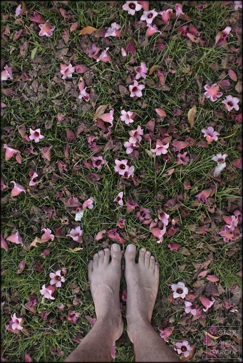 pies,flores,cesped,jardin