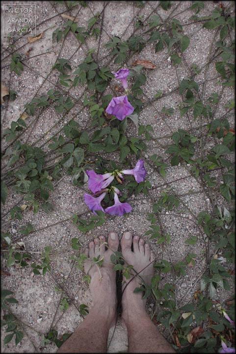 pies,suelo,plantas,flores,serie