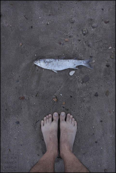 pies,arena,playa,pez