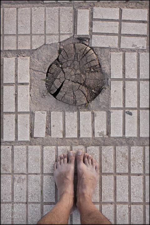 serie,pies,suelo,tronco,cortado