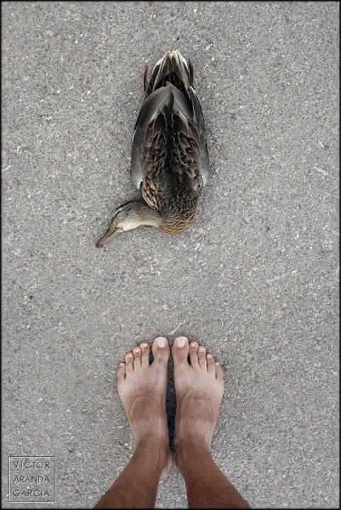 Autorretrato con un pato en el suelo frente a los pies